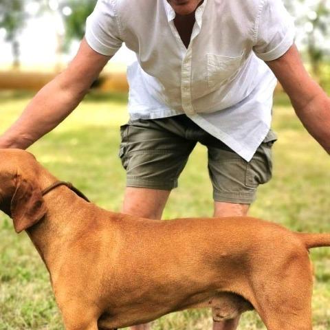 Attila, 63 éves társkereső férfi - Dunavarsány