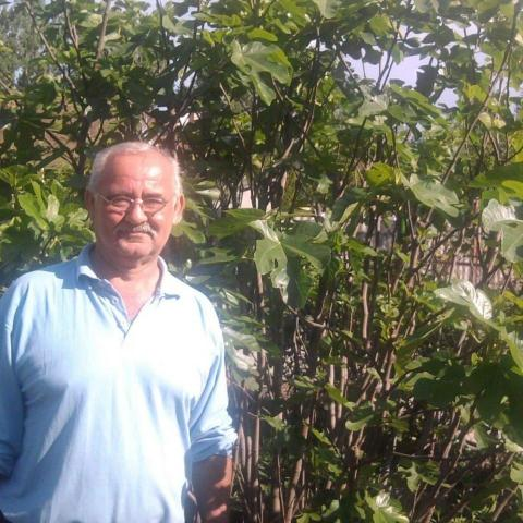 Árpád, 62 éves társkereső férfi - Göd