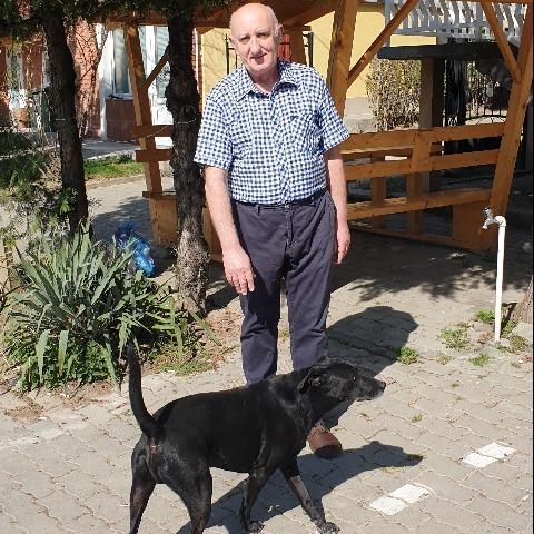 Bálint, 66 éves társkereső férfi - Biatorbágy