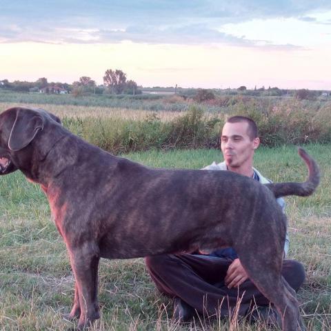 Lajos, 32 éves társkereső férfi - Simontornya